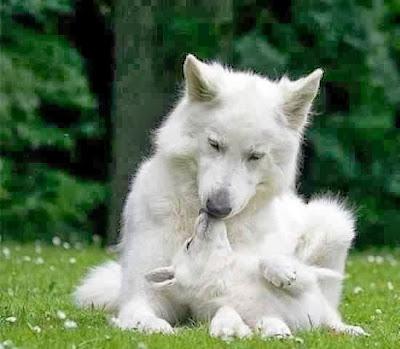 Imágenes bonitas de Perros, dogs