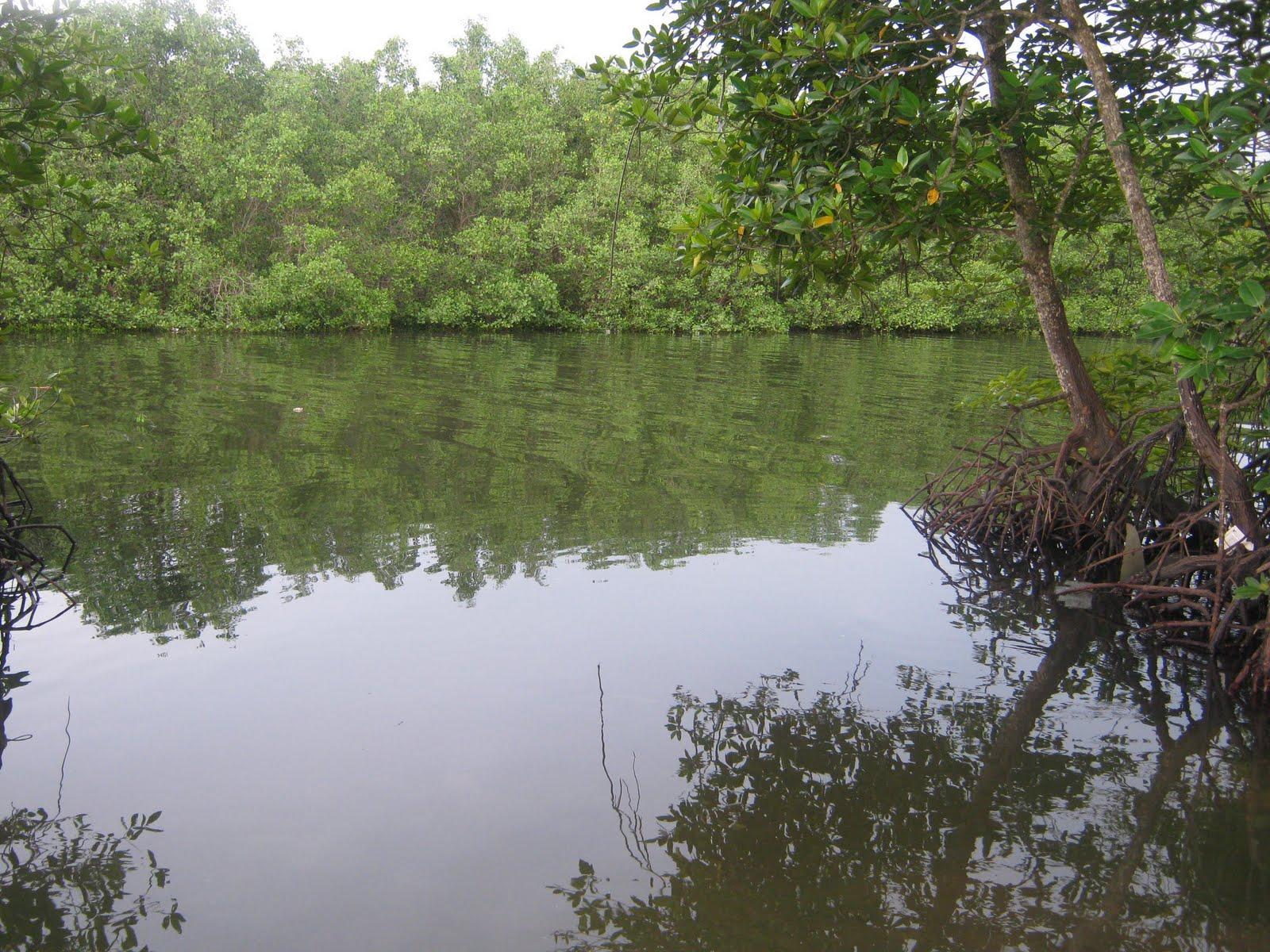 Kepentingan hutan paya bakau