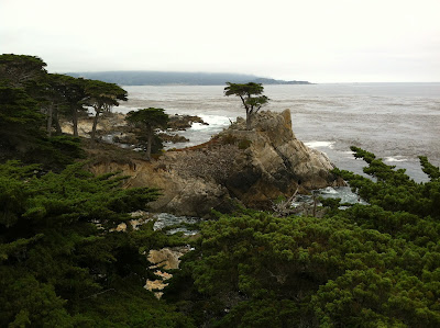 Lone Cypress 17 Mile Drive