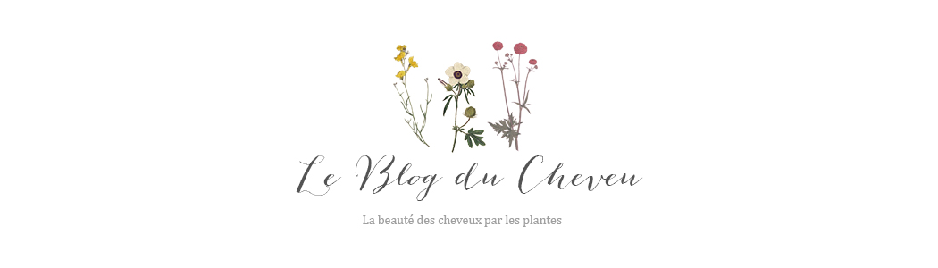 Le blog du cheveu