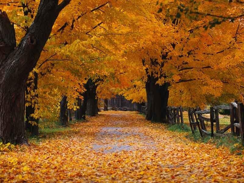 beautiful autumn season wallpapers hd nice wallpapers