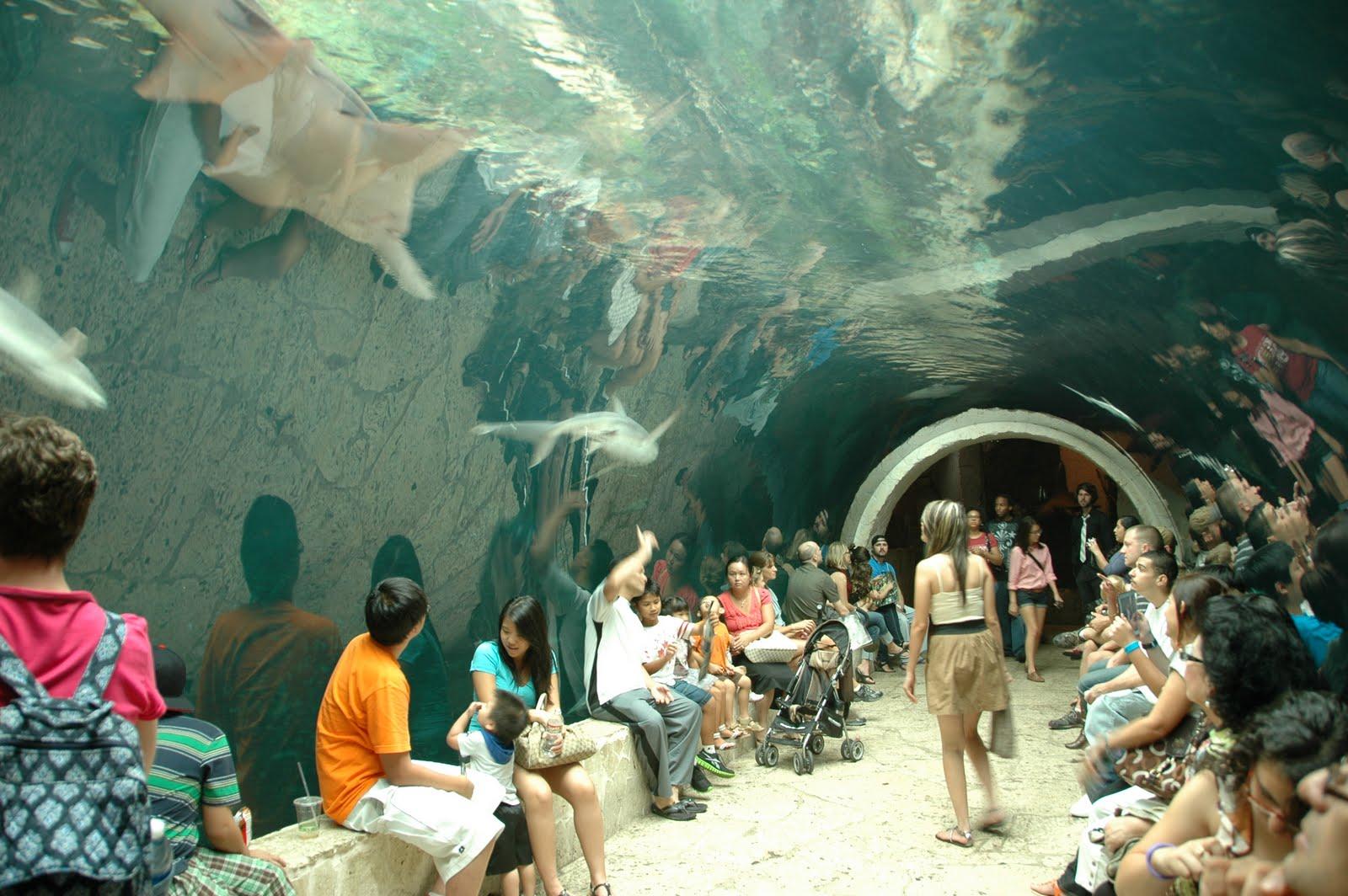 Whatvlthinks Dallas World Aquarium
