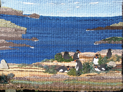 Tapestry of Rockhopper Pengiuns in the Falkland Islands