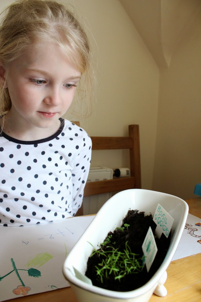 green thumbs, family fun, herbs, spring, todaymyway.com