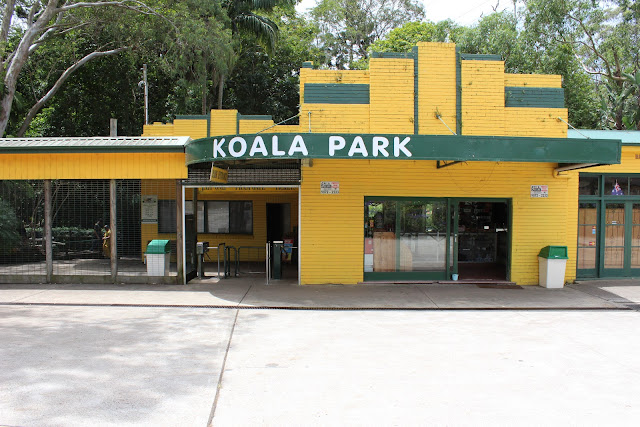 an afternoon at the koala park.