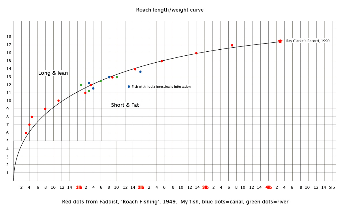 Idlers quest roach lengthweight curve a new record is out there i then went to work measuring a few of my own captures by creating rulers in photoshop from objects included in mat shots of fish the brass scales i use nvjuhfo Image collections