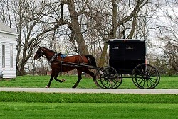black amish buggy being pulled by a brown horse on a gravel road