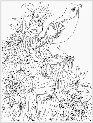 robin bird coloring pages for adult