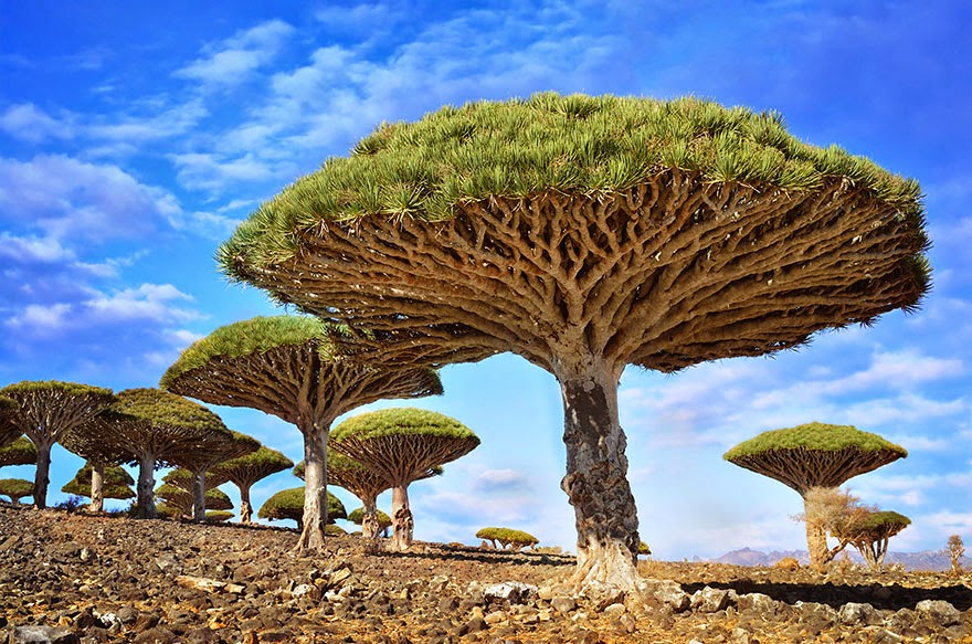 The Most Beautiful Trees in The World