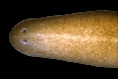 Computador soluciona mistério da biologia que durava mais de 100 anos