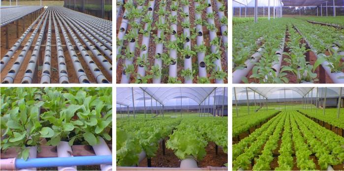 Cultivo em hidroponia curso hidroponia hidrop nicos for Imagenes de hidroponia