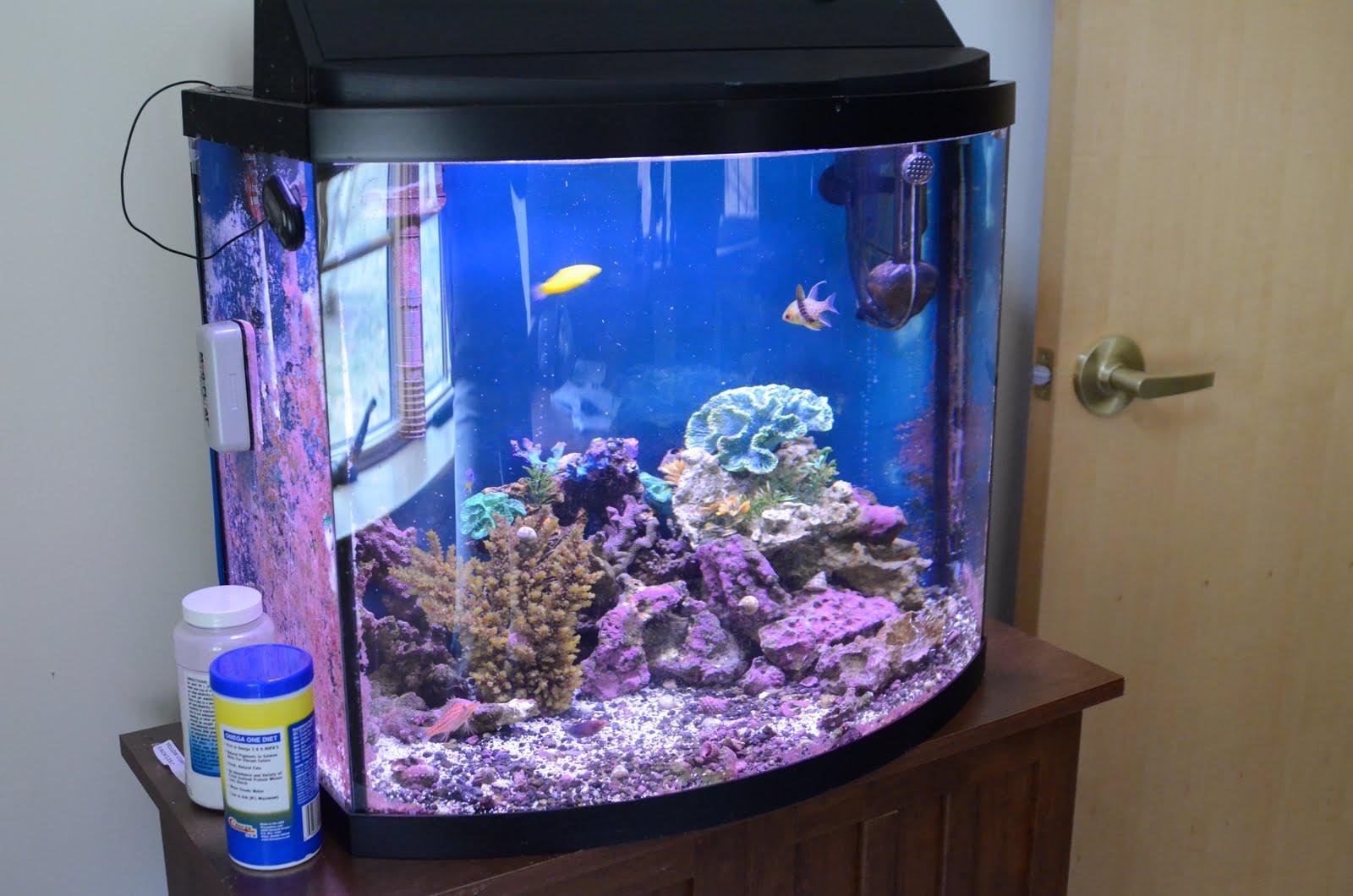 Pretty Fish A very pretty fish tank.
