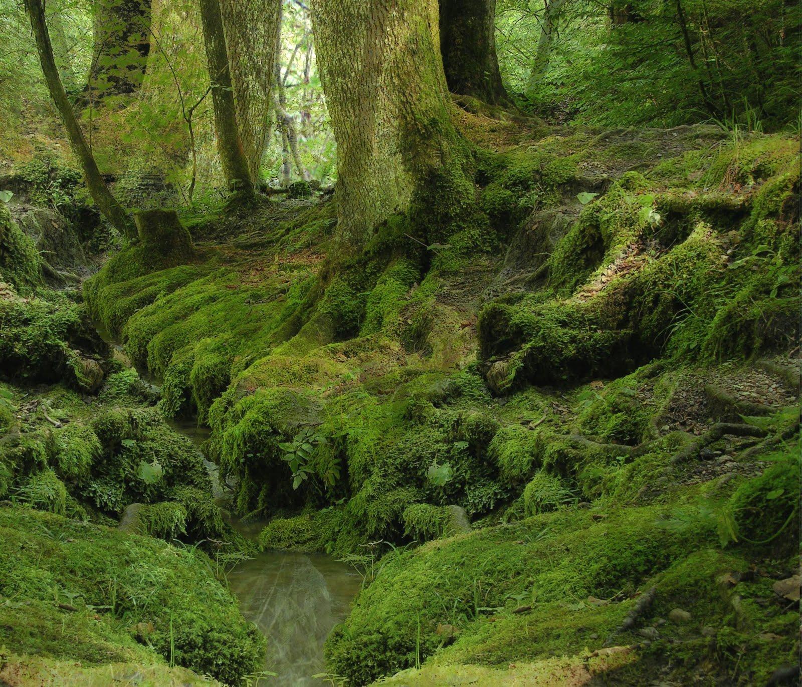 http://1.bp.blogspot.com/-d8IPb4EyIxU/TtzQ6zaLCRI/AAAAAAAAAq0/-SxV_kkW3_k/s1600/forest-background-1-750528.jpg