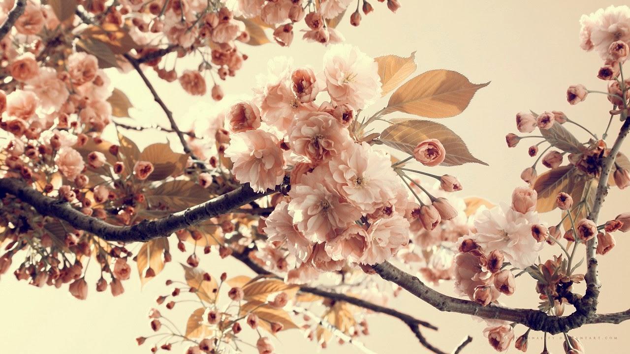 aprecie a beleza da vida. coloque flores nela.