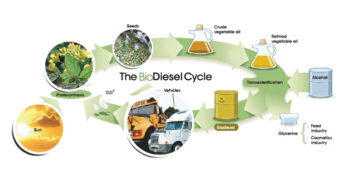 essay on biofuels Essay on biofuels  biofuels are made from agricultural crops like corn and sugar cane biofuels sources, biofuel policy,  environmental and energy study institute.