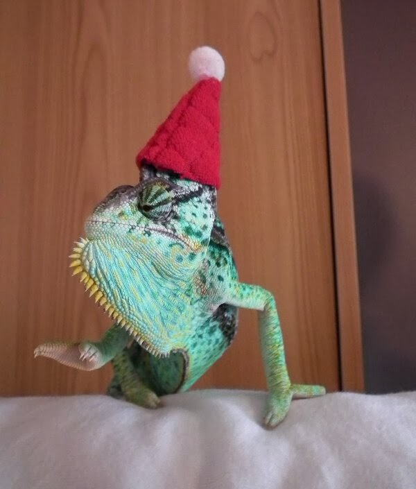 Funny animals of the week - 6 December 2013 (35 pics), chameleon wears christmas hat