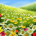 Colorful Flowers Garden images