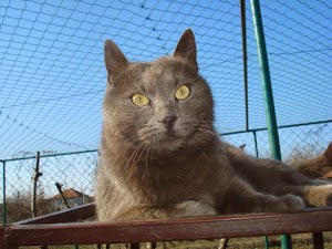 "Laura's story of Cat Shelter Felix on ""care2"""