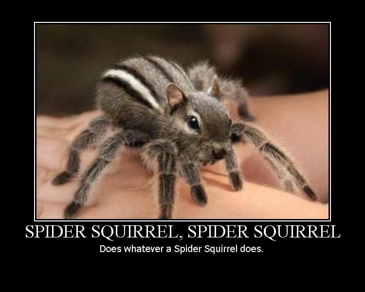 Spidersquirrel | Uncyclopedia | Fandom powered by Wikia