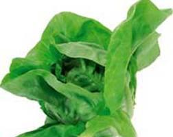Cure cu salate pentru dezintoxicare si revitalizare