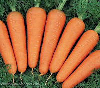 чистая морковь для кулинарного карвинга