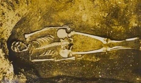 Skeleton of Indian Giant