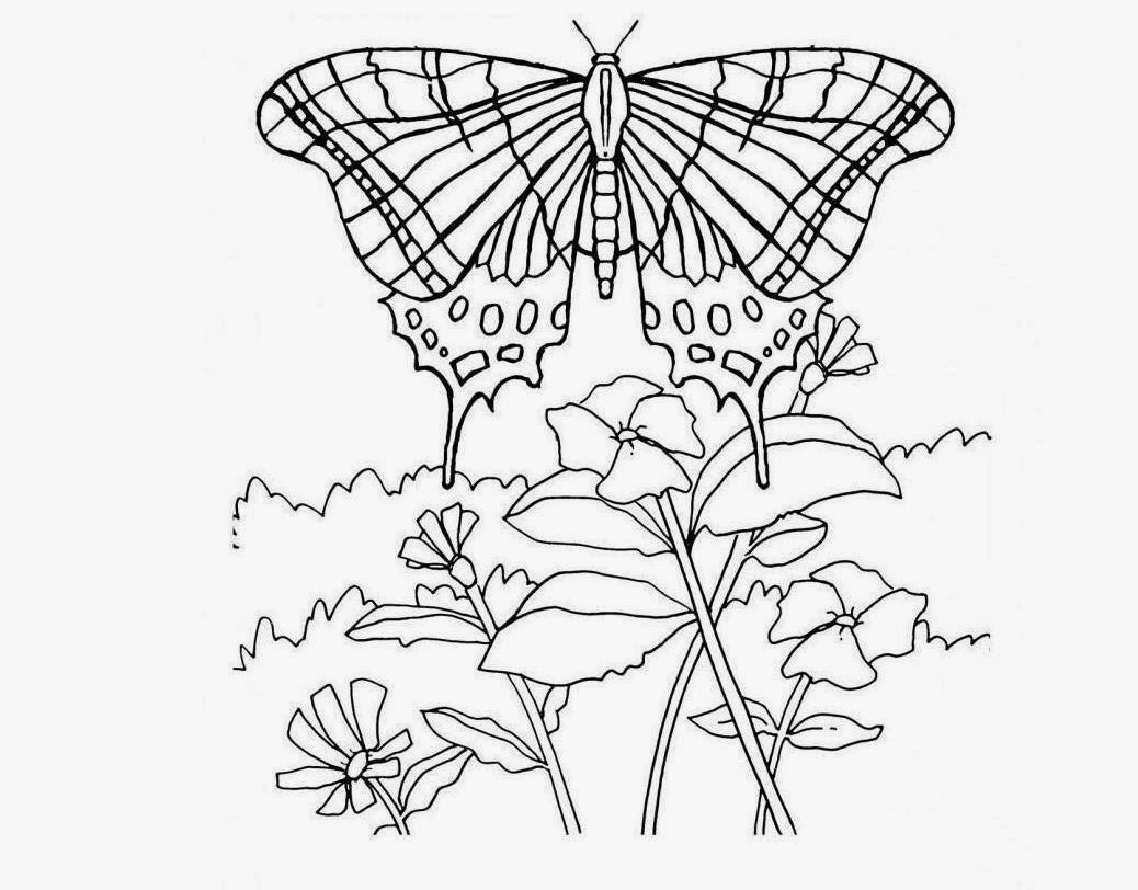 The Simple Butterfly Coloring Drawing Free wallpaper