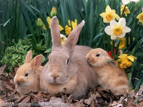 Three cute rabbits.
