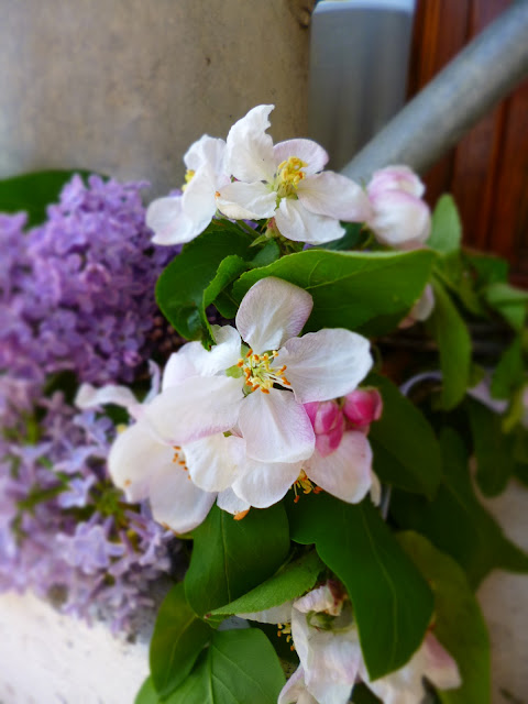 Lilac e fiori di ciliegio.