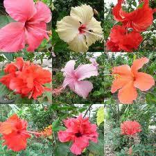 bunga negaraku...