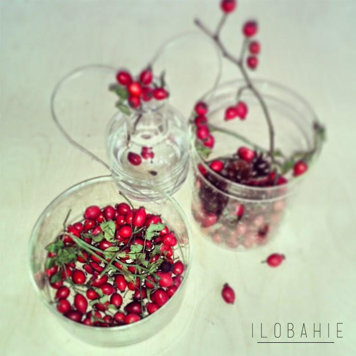 Czerwone owoce dzikiej róży w szklanych wazonach na blogu wnętrzarskim