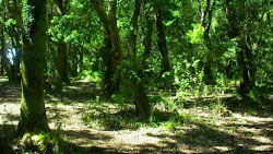 Parque Tumbes