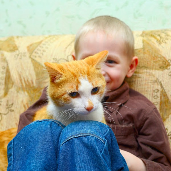 Childhood memories of pets influence adult attitudes to animals