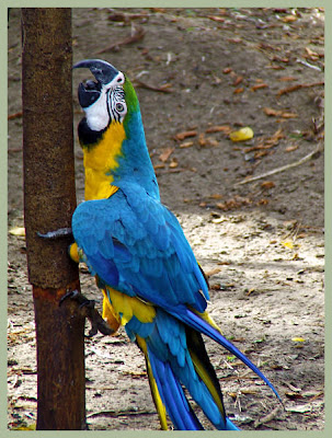 macaw in jungle