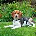 El mejor regalo de cumpleaños para un perro | Notengointer.net