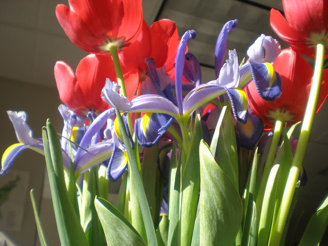 tulips and irises