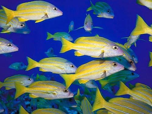 Plongée Îles Guadeloupe