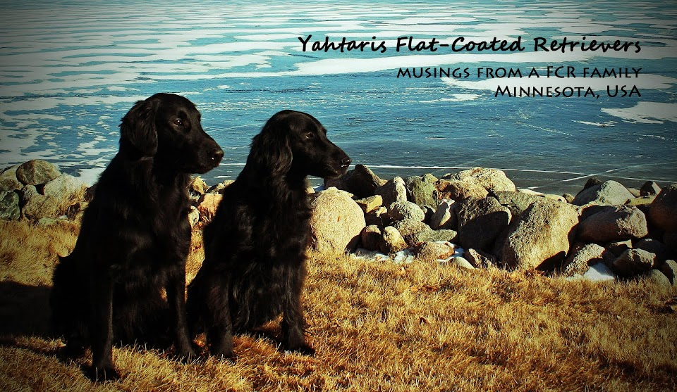 Yahtaris Flat-Coated Retrievers