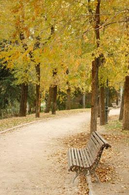 12 cosas que hacer en otoño