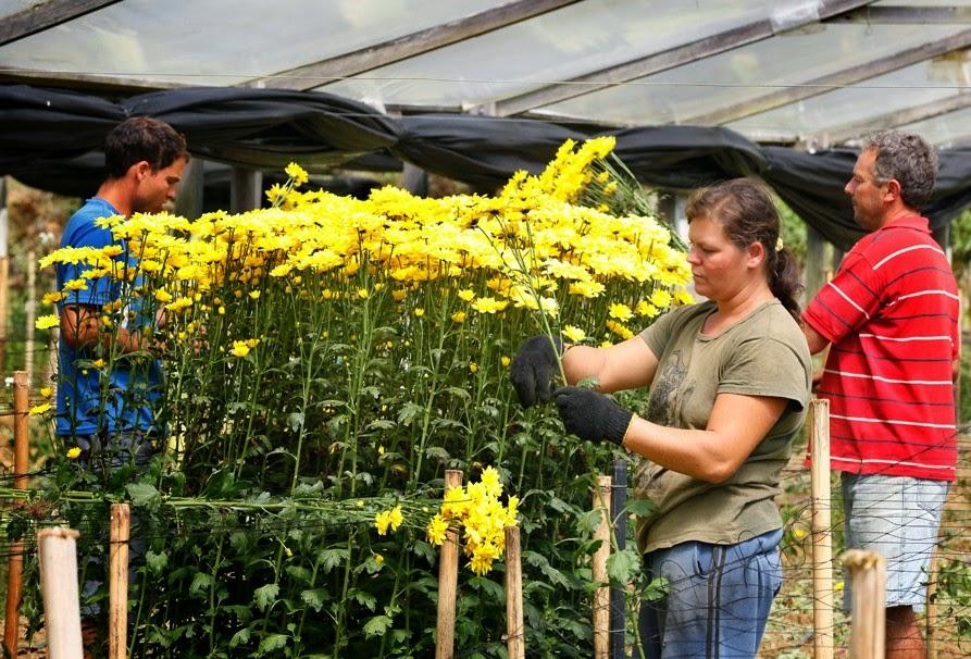 Primavera movimenta setor de Floricultura do estado do Rio
