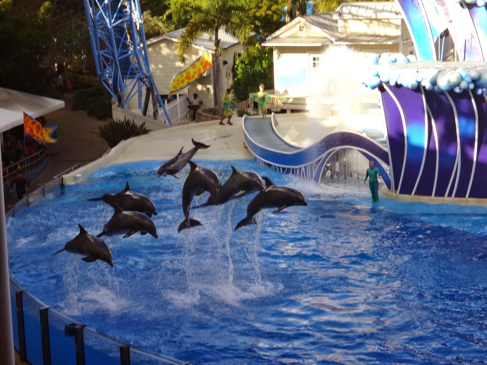 focas - blue horizons - parque sea world - orlando, florida