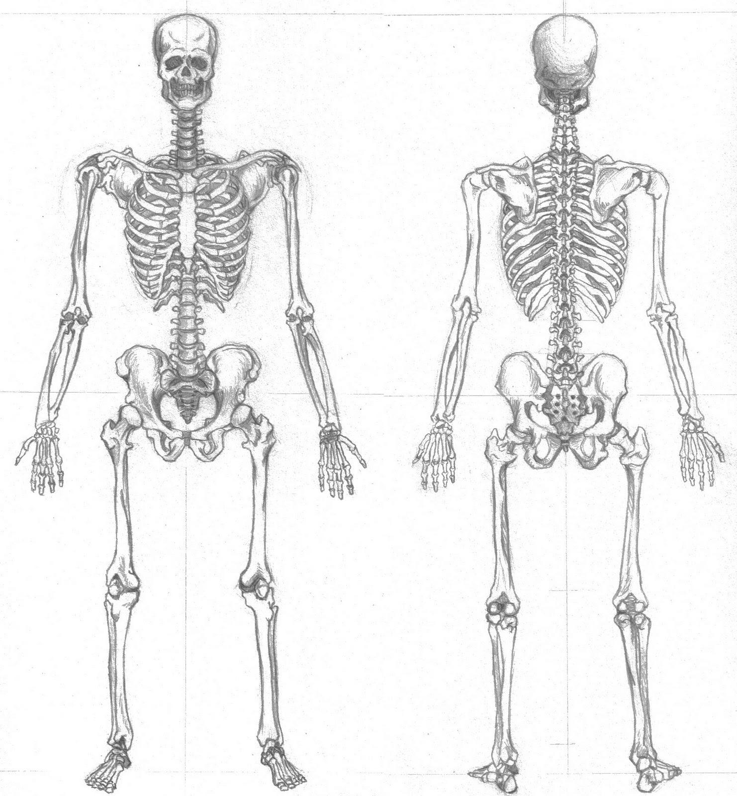 David Vázquez Guerrero: 9zeros: Dibujo Ilustrativo (Anatomía Humana)
