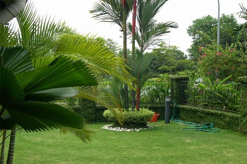 gambar taman mungil kecil minimalis