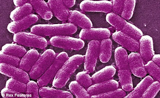 Divinely Toxic Mycotoxins Toxic Mold Toxins Candida