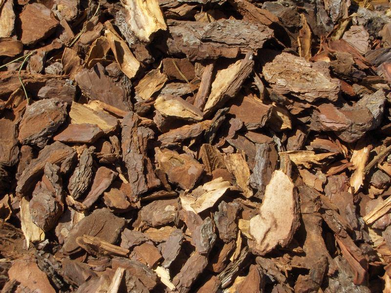 6 cuidados b sicos para tu jard n plantas - Corteza de pino ...