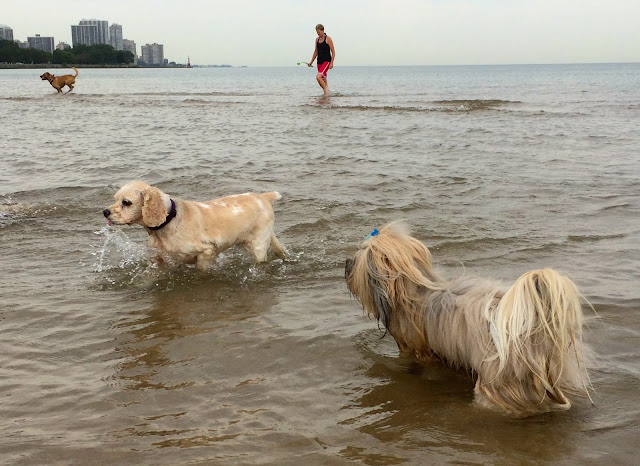 Montrose dog beach