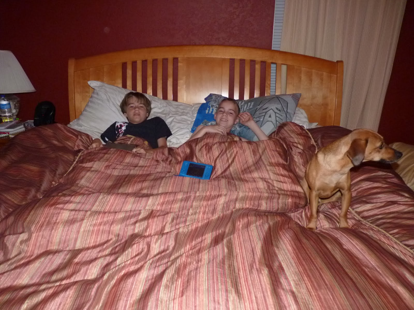 bibigon DS #1 and #2 and Moose. The boys get to fall asleep in my room. One of them will be sent to the couch when I go to bed.