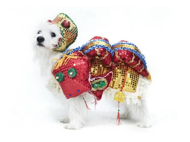 dogs dresses