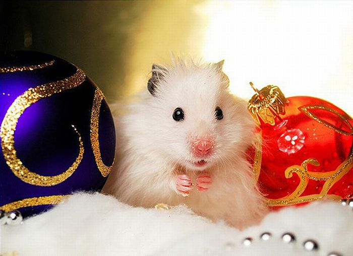 Photo trick 20 funny christmas animals pictures for Christmas pictures of baby animals