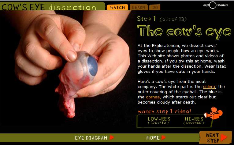 Virtual Cat Dissection Game